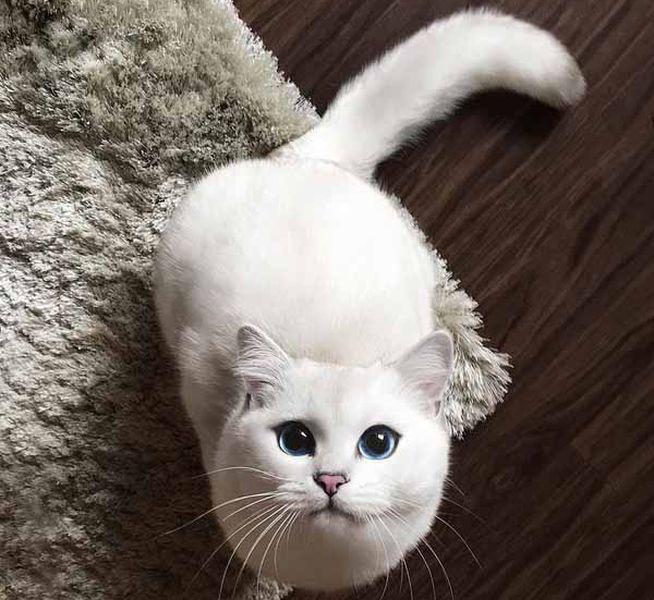 coby el gato mas guapo de mundo 08