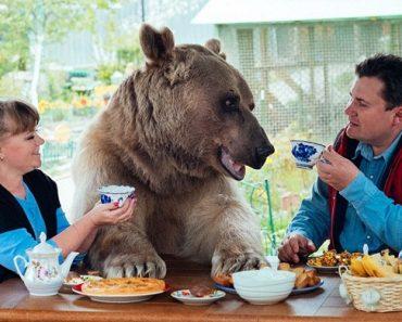 stefan-el-oso-que-vive-con-una-familia